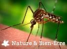 Astuces naturelles contre les Moustiques